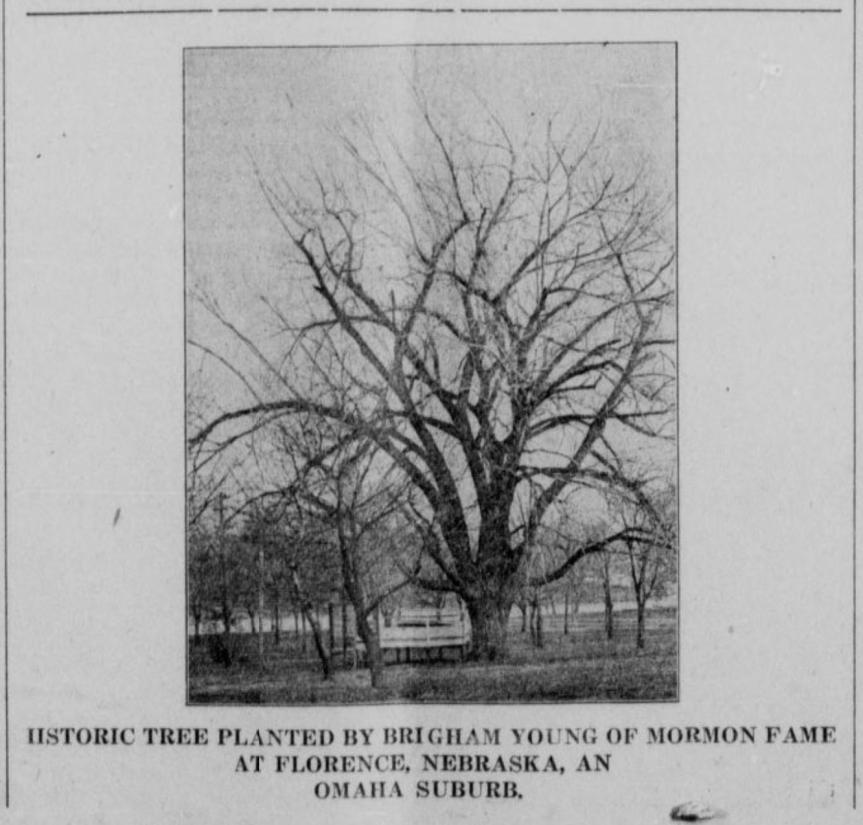 A History of the Mormon Tree in Florence,Nebraska