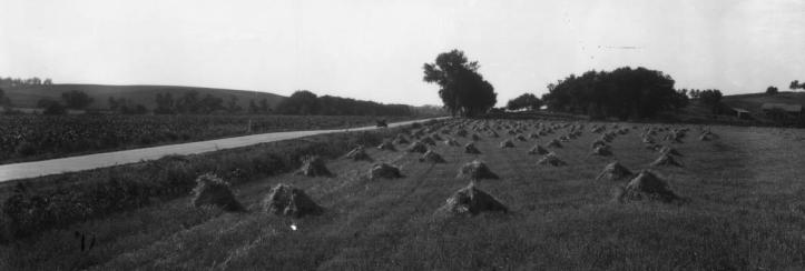 Barley field Irvington Nebraska 1930