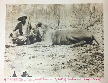 This is Dr. Aaron McMillan on safari in Angola. He is shown with an 11' lion he presumably hunted circa 1933.